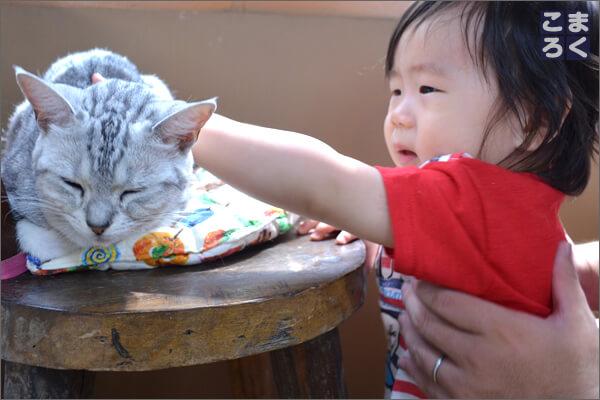 猫に触ろうとするも、ちょっと泣きそう(笑)
